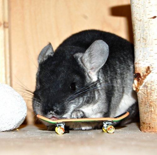 Скейт - мышь